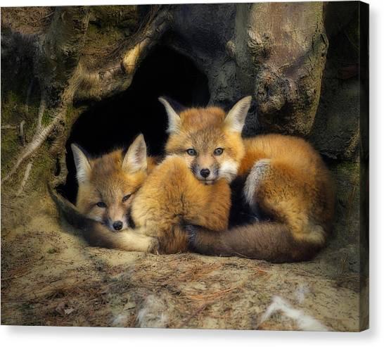 Best Friends - Fox Kits At Rest Canvas Print