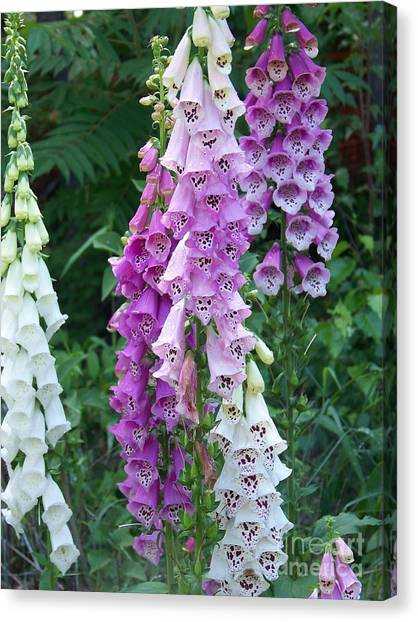 Foxglove After The Rains Canvas Print