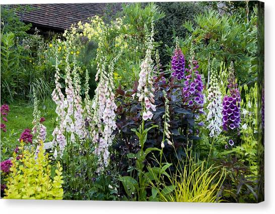 Foxglove Flowers Canvas Print - Foxgloves (digitalis Sp.) by Science Photo Library