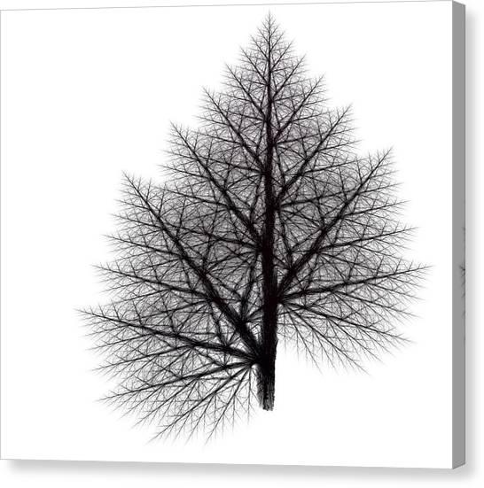 Fractal Essence Of A Tree Canvas Print