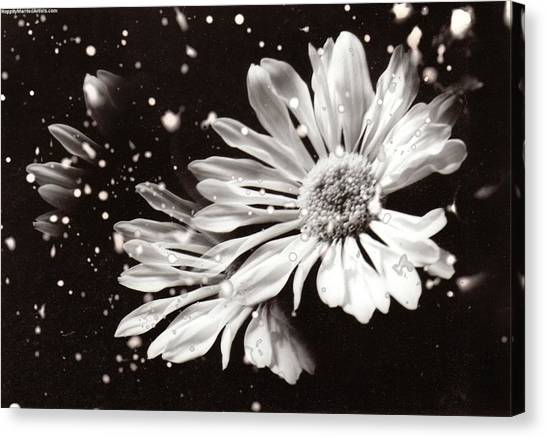 Fractured Daisy Canvas Print