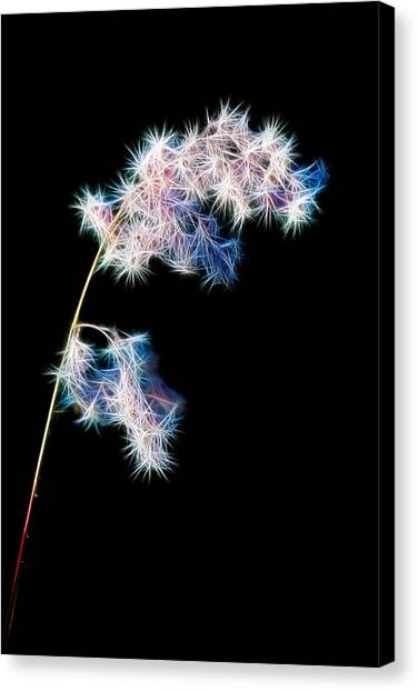 Fragile Canvas Print by Brad Grove