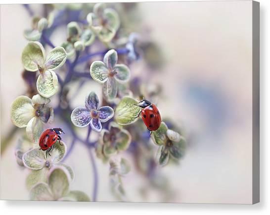 Ladybugs Canvas Print - Fragile by Ellen Van Deelen