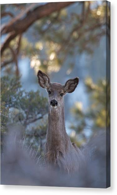 Framed Deer Head And Shoulders Canvas Print
