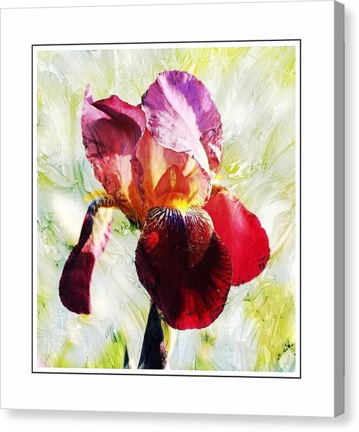 Framed Iris Canvas Print