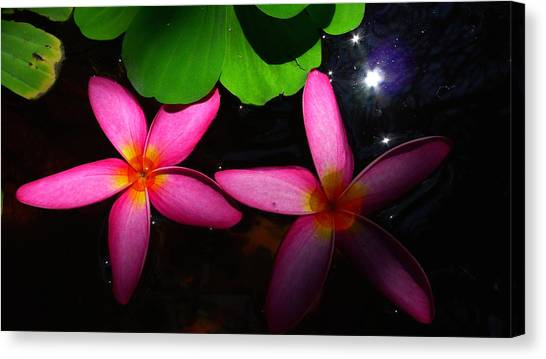 Frangipani Flowers On Water Canvas Print
