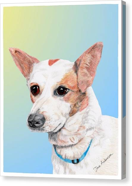 Freckles A Former Shelter Dog Canvas Print by Dave Anderson