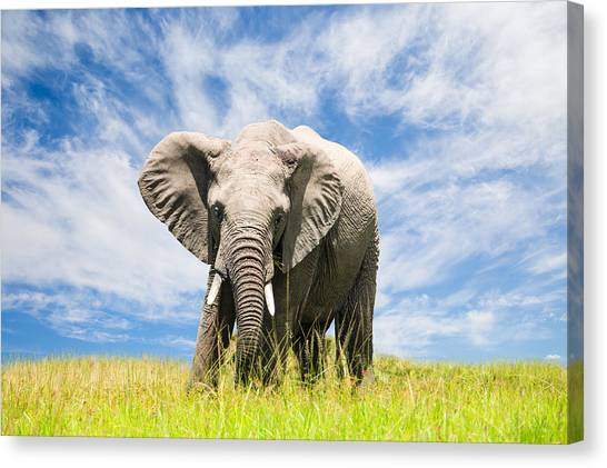 Free African Elephant Canvas Print by 1001slide