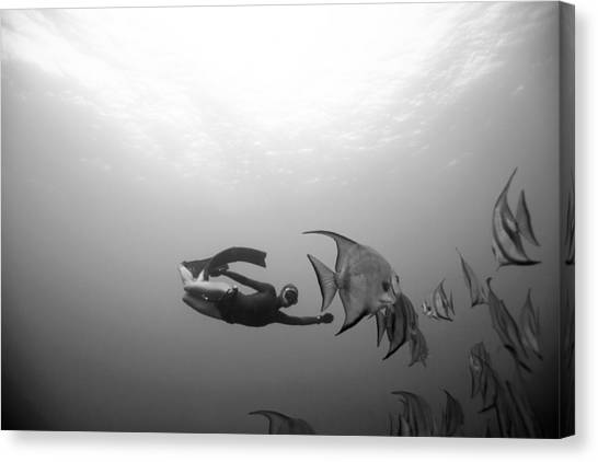 Freediver And Batfish Canvas Print by One ocean One breath