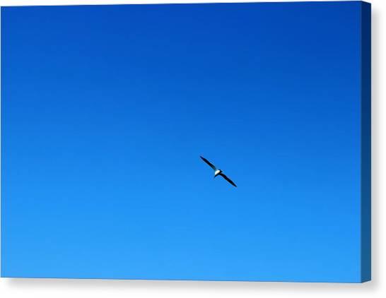 Freedom And Solitude Canvas Print by Phoresto Kim