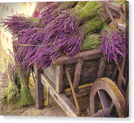 French Lavender Cart Canvas Print