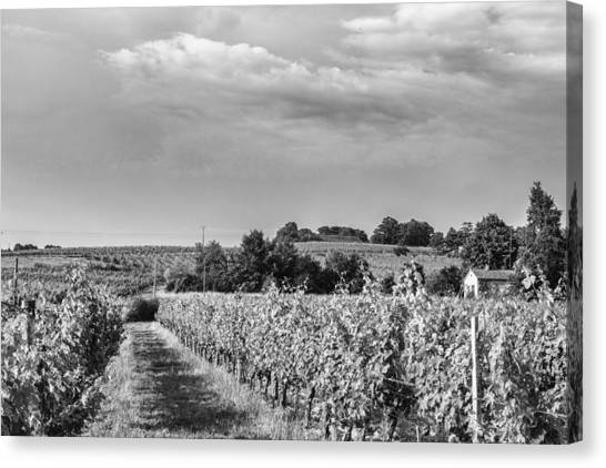 Black and white vineyard canvas print french vineyard in mono by georgia fowler