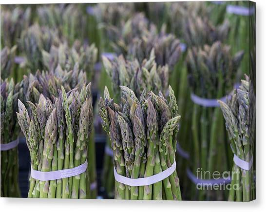 Asparagus Canvas Print - Fresh Asparagus by Mike  Dawson