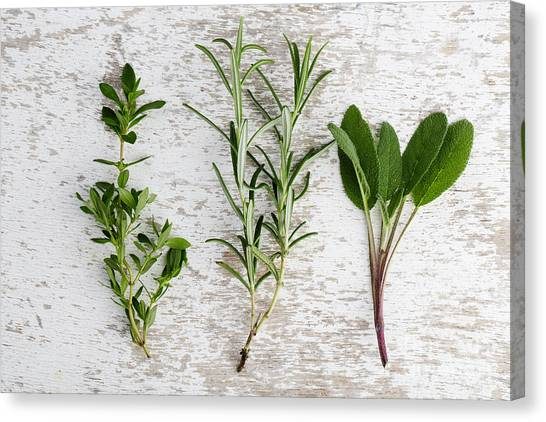Presentations Canvas Print - Fresh Herbs by Nailia Schwarz