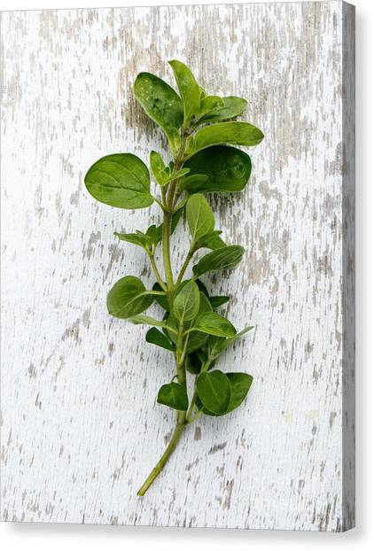 Presentations Canvas Print - Fresh Oregano by Nailia Schwarz