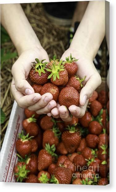 Fresh-picked Canvas Print - Fresh Picked Strawberries by Edward Fielding