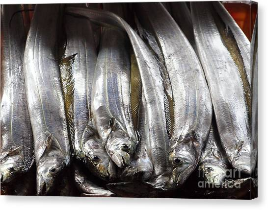 Fresh Ribbonfish For Sale In Taiwan Canvas Print
