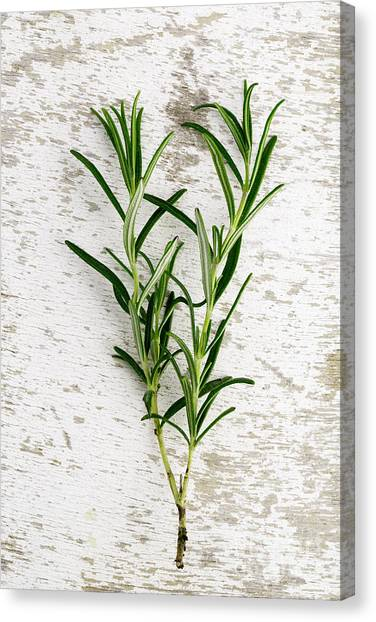 Presentations Canvas Print - Fresh Rosemary by Nailia Schwarz