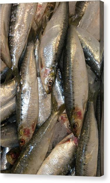 Fish Market Canvas Print - Fresh Sardines by John Cole/science Photo Library