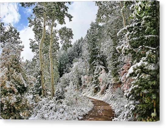 Fresh Snow Canvas Print by Gene Praag