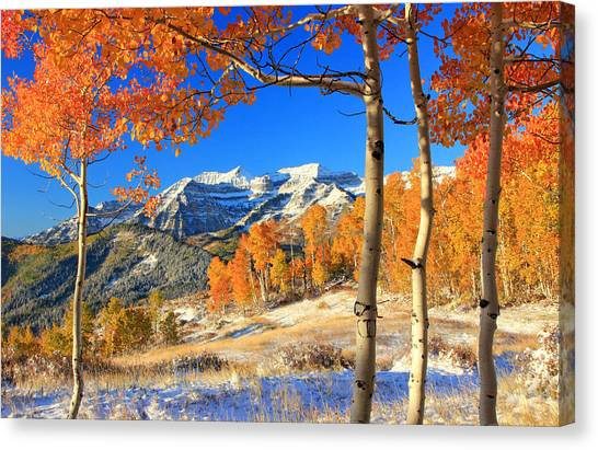 Fresh Snow In The Aspens. Canvas Print