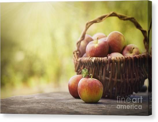 Mythja Canvas Print - Freshly Harvested Apples by Mythja  Photography