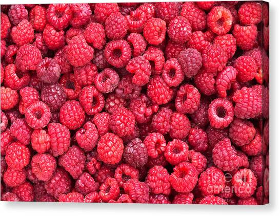 Raspberries Canvas Print - Freshly Picked by Delphimages Photo Creations