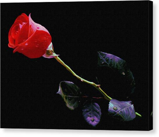 Freshly Watered Red Rose Canvas Print