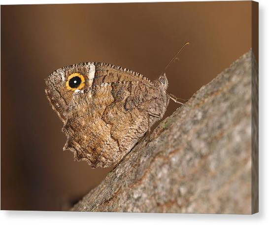 Freyer's Grayling Canvas Print