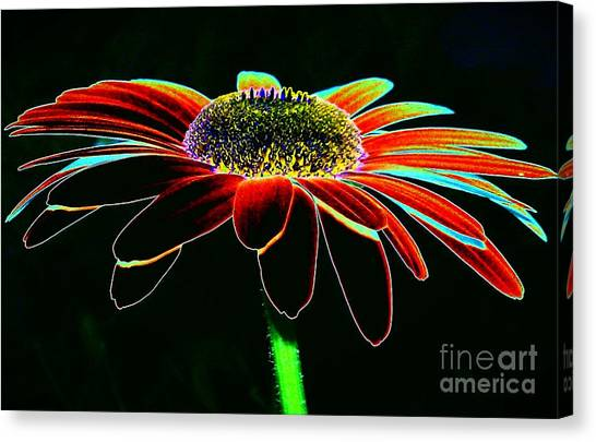 Friday Night Daisy Canvas Print