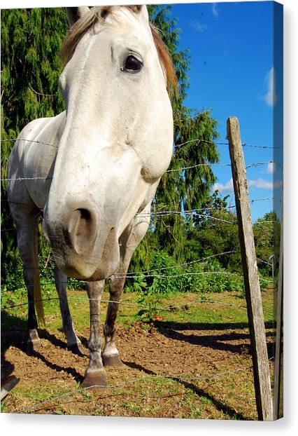 Friendly Horsey Canvas Print by Mamie Gunning