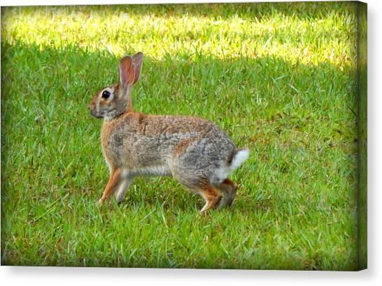 Friendly Rabbit I Canvas Print by Lynn Griffin