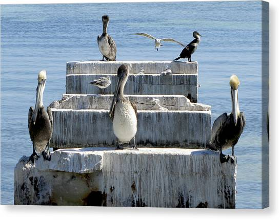 Pelican Friends Canvas Print