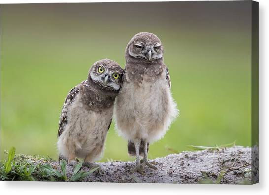 Friends Canvas Print by Greg Barsh