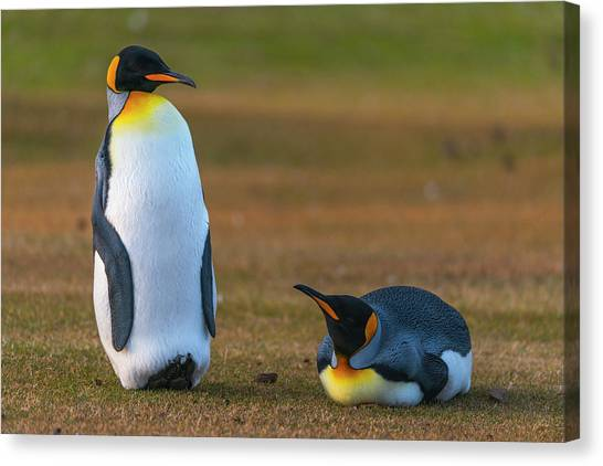 Penguins Canvas Print - Friends In The Grass by Miquel Angel Art?s