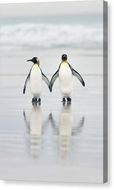 Penguins Canvas Print - Friends by Joan Gil Raga