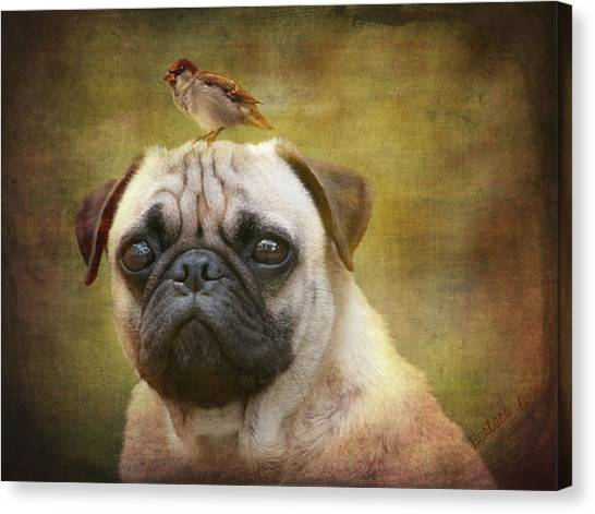 Friends Like Pug And Bird Canvas Print