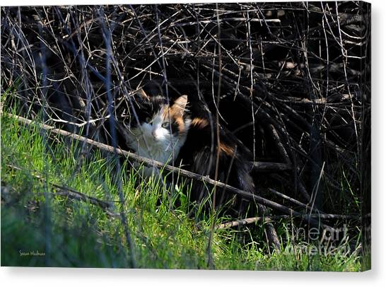 Frightened Feral Calico  Canvas Print