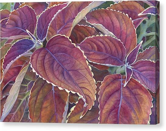 Coleus Canvas Print - Frillery by Sandy Haight