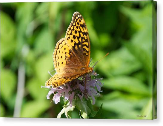 Frittillary And Pink Bee Balm Canvas Print