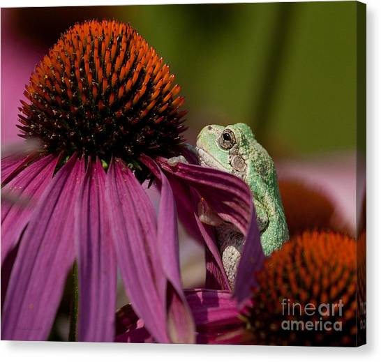 Frog And His Cone Canvas Print