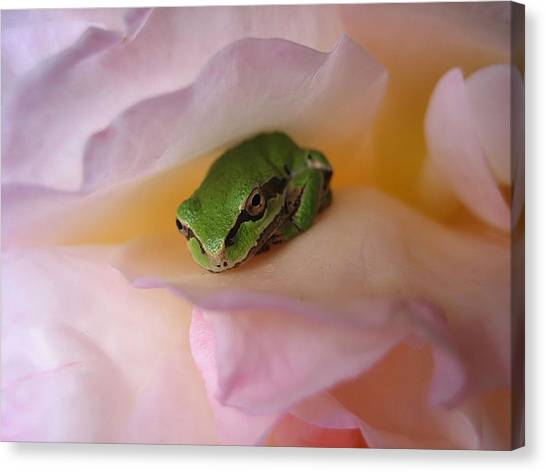 Frog And Rose Photo 2 Canvas Print