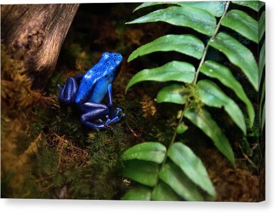 Frog Blues Canvas Print