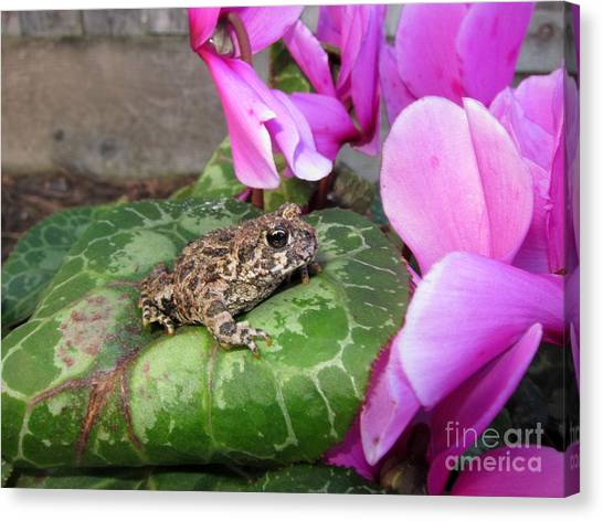 Frog On Cyclamen Plant Canvas Print