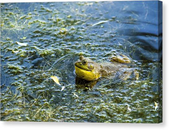 Canvas Print featuring the photograph Frog Song by Edward Peterson