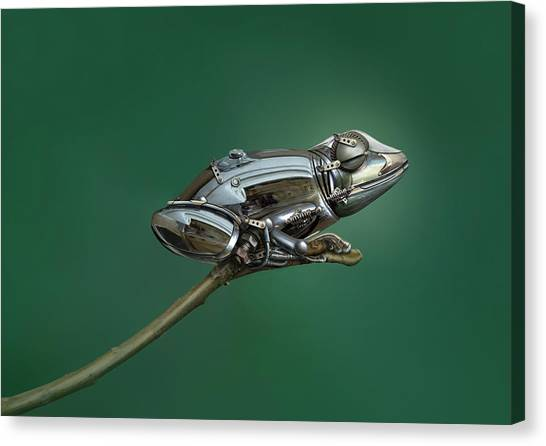 Metal Canvas Print - Frog by Sulaiman Almawash