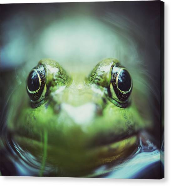 Frogs Level Canvas Print by Shaunl