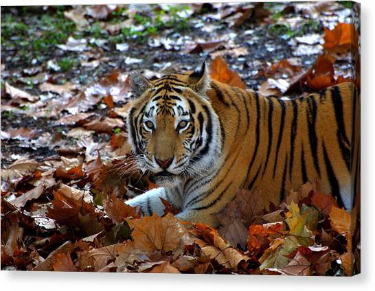 Frolicking In The Leaves Canvas Print