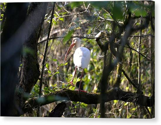 Swamps Canvas Print - From A Distance by Heather Galloway