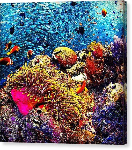 Scuba Diving Canvas Print - From The Archives: Maldives, October by Nick Lucey